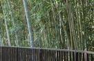 Kaisergarten | Bambuswald
