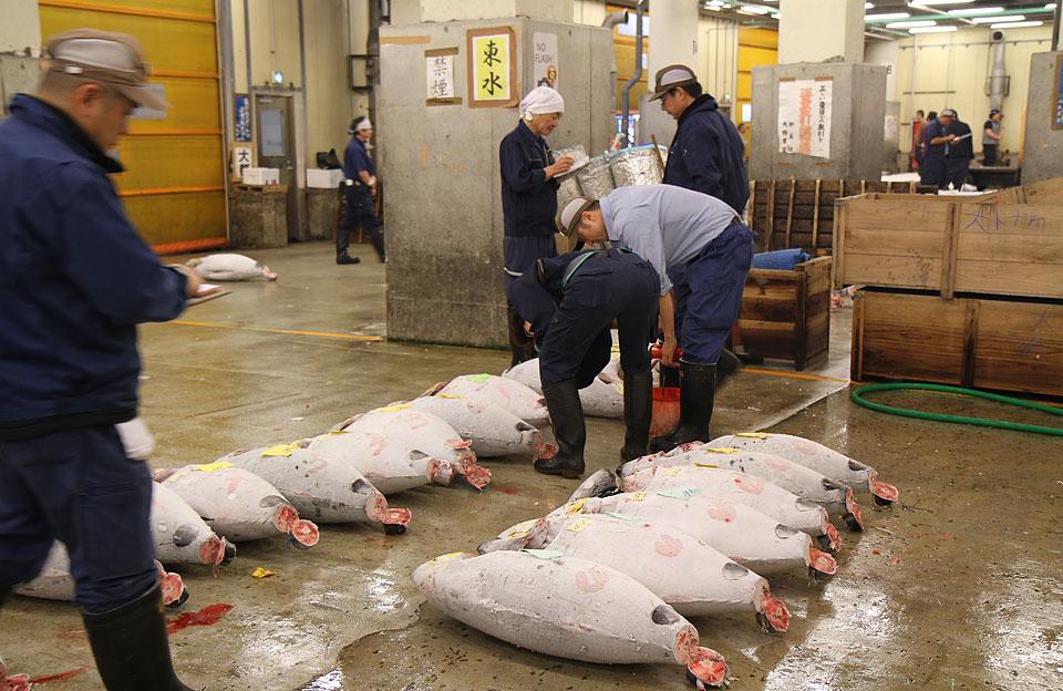 Tsukiji Fischmarkt | Betrachtung der Ware