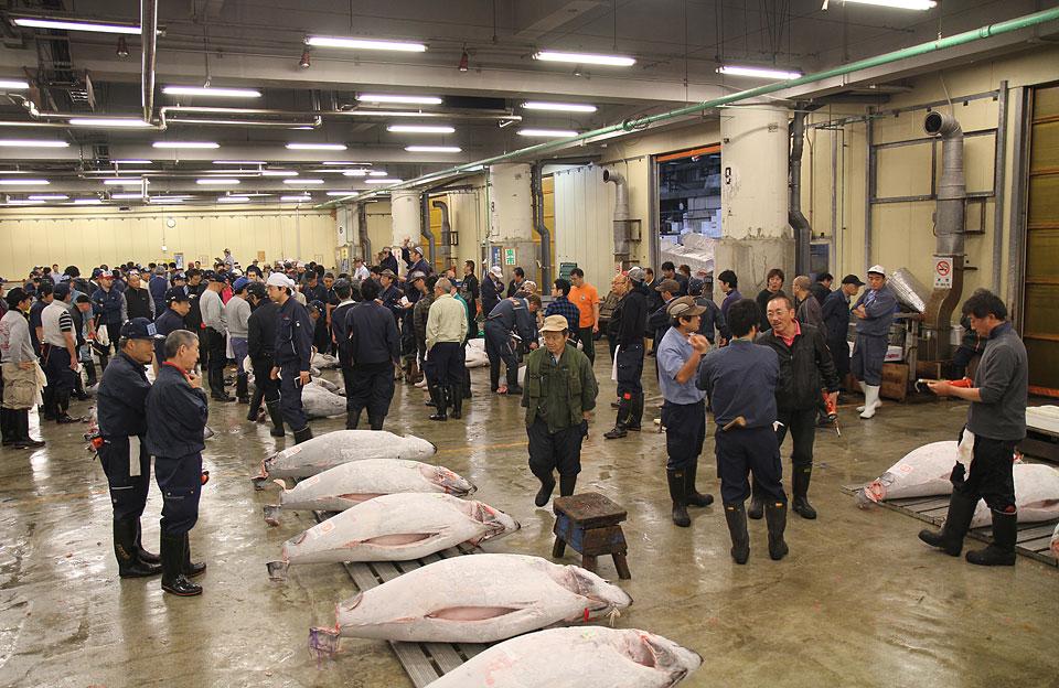 Tsukiji Fischmarkt | Vor der Auktion
