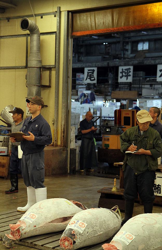 Tsukiji Fischmarkt | Tiefgefrorene Thunfische