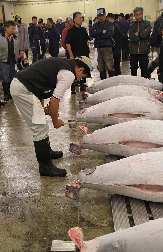 Tsukiji Fischmarkt | Qualitätsprüfung