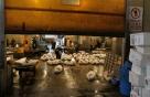 Tsukiji Fischmarkt | Bereitstellung der Thunfische für den Abtransportieren
